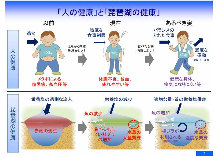 琵琶湖の食物連鎖基盤 栄養塩と植物プランクトン