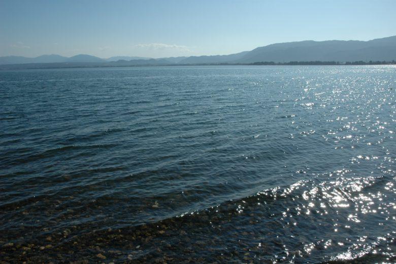 琵琶湖の生態系を支えるプランクトン 固有種には絶滅危惧種も