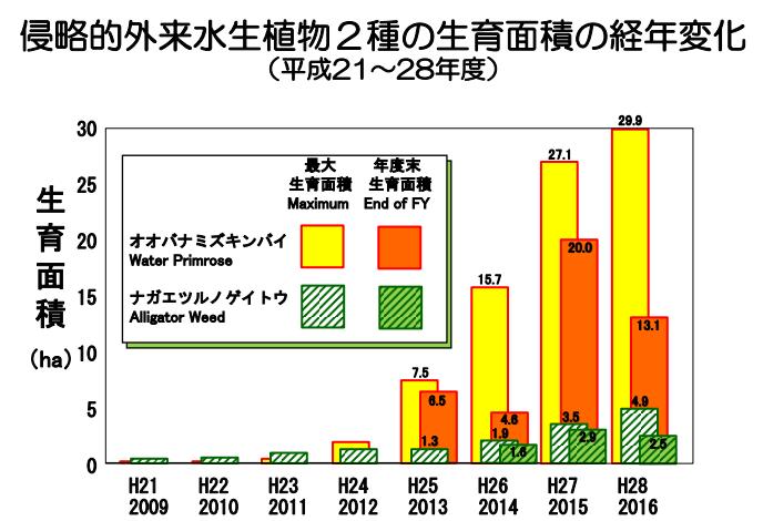 琵琶湖の侵略的外来水生植物への対策