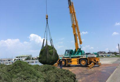 増える琵琶湖の「水草」と除去問題 刈り取った水草はどこに行く?