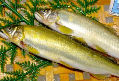 おいしく食べて琵琶湖を元気に 鮎が入った「びわこちっぷす」