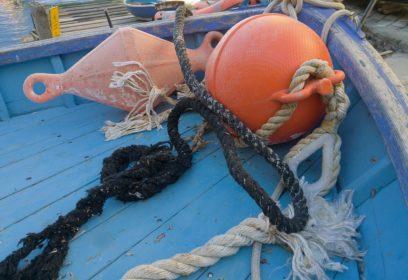 琵琶湖の漁獲量が年々減少 ピーク時の1/100以下のものも