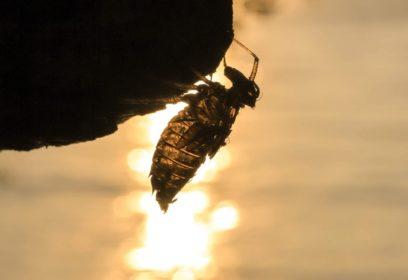 琵琶湖の周りにはどんな昆虫がいる? 琵琶湖博物館ブックレット第10弾出版