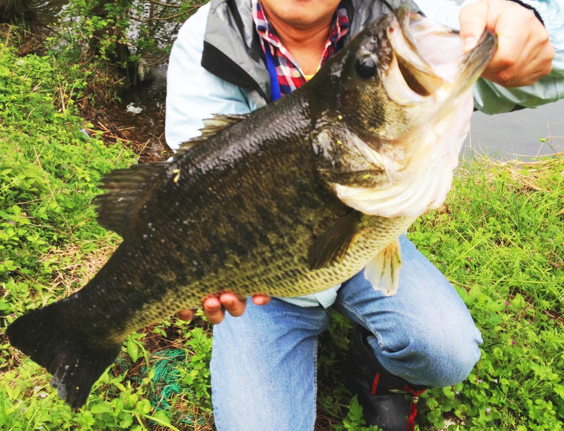 外来種がいなかった頃の琵琶湖に!「琵琶湖を戻す会」外来魚駆除の取り組み
