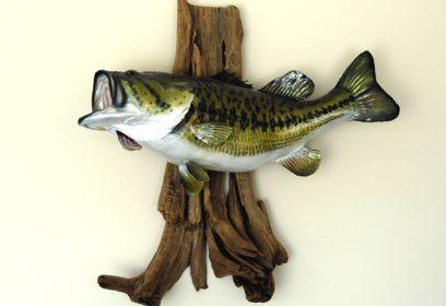外来魚対策で捕獲・駆除された外来魚はどうなる?